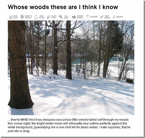 woods - squirrels